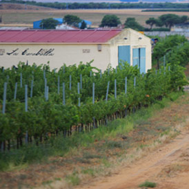 caraballas vino ecologico bodega viñedos ecologicos