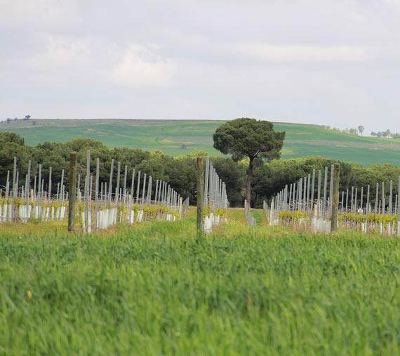 caraballas entorno cultivos ecológicos verdejo