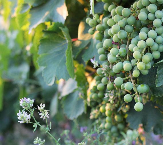 caraballas entorno y viñedos ecologicos verdejo medina del campo
