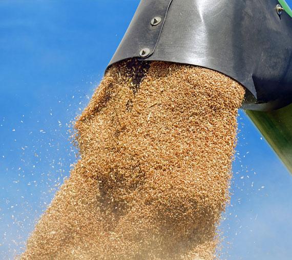 cultivos ecológicos finca las caraballas cereales ecológicos