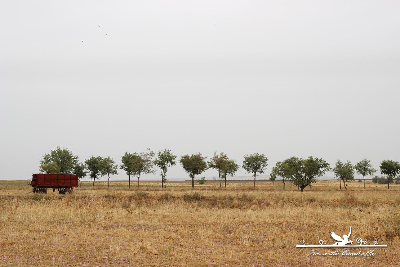 caraballas verdejo ecológico medina del campo valladolid